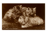 Sepia Photograph of Kittens Print