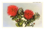 Lehua Flower, Hawaii Prints