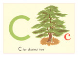 C is for Chestnut Tree Print