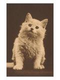 Alert Kitten Prints