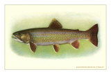 Eastern Brook Trout Poster