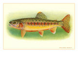 Golden Trout Prints