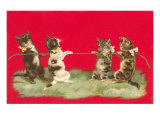 Kittens Playing Tug of War Posters