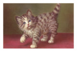 Tabby Kitten Prints