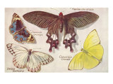 Varieties of Butterfly Poster