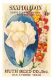 Snapdragon Seed Packet Posters