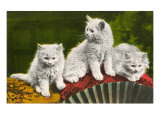 Three Kittens with Fan Print