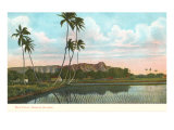 Rice Fields, Palms, Hawaii Posters