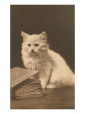White Kitten with Book Print