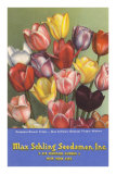Tulip Seed Packet Posters