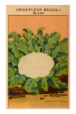 French Cauliflower Broccoli Seed Packet Posters
