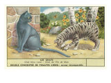Exotic Cats Prints