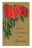 Season's Greetings from Hawaii, Poinsettias Posters