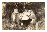 Gambling Squirrels Prints