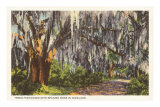 Spanish Moss in Dixieland Posters