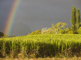 Sugar cane field, St-Philippe, South Reunion, Reunion Island, France Photographic Print by Walter Bibikow