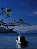 Bay of Ilha Grande, Rio De Janeiro State Ilha Grande, Brazil Photographic Print by Julie Bendlin