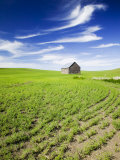 Spring Lentil Crop and Old Barn, Idaho, USA Photographic Print by Terry Eggers