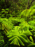 Lush tropical greenery in Hawaii Volcanoes National Park, Big Island, Hawaii Photographic Print by Jerry Ginsberg