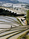Flooded Bada Rice Terraces, Yuanyang County, Yunnan Province, China Photographic Print by Charles Crust