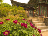 Changdeokgung Palace, Huwon Secret Garden, Seoul, South Korea Photographic Print by Ellen Clark