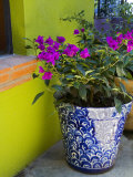 Bouganvilla in a Ceramic Pot, San Miguel De Allende, Guanajuato State, Mexico Photographic Print by Julie Eggers
