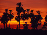 Sunset, The Pantanal, Matto Grosso Du Sul, Brazil Photographic Print by Julie Bendlin