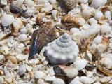 Shells on The Beach, Puerto Telchac, Mexico Photographic Print by Julie Eggers