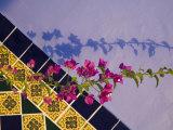 Tiled Wall near Pool, Hotel Mediomundo, Merida, Yucatan, Mexico Photographic Print by Julie Eggers