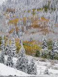 Snow Covered Aspens, Maroon Bells, Colorado, USA Photographic Print by Terry Eggers