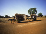 Farmers with Donkey Carts, Burkina Faso, West Africa Photographic Print by Ellen Clark