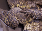 Crocodile Details, Thailand Photographic Print by Gavriel Jecan