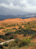 Storm at Coral Pink Sand Dunes State Park, Utah, USA Photographic Print by Diane Johnson