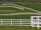 Fence Winding Across Calumet Horse Farm, Lexington, Kentucky, USA Photographic Print by Adam Jones