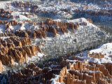 Pillars of Limestone at Bryce Canyon National Park, Utah, USA Photographic Print by Diane Johnson