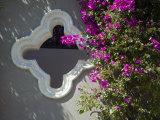 Bouganvilla Blooming, San Miguel De Allende, Guanajuato State, Mexico Photographic Print by Julie Eggers