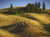 Fields, Palouse, Whitman County, Washington, USA Photographic Print by Charles Gurche