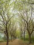 Path Through Tunnel of Trees at Monticello, Virginia, USA Photographic Print by John & Lisa Merrill
