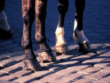 Horse Hooves on Cobblestone, Prague, Czech Republic Photographic Print by David Herbig