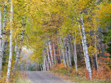 Fall Color Lines Gravel Road, Keweenaw Penninsula, Michigan, USA Stampa fotografica di Chuck Haney