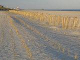Grasses and Fences on Beach, Folly Island, Charleston, South Carolina, USA Photographic Print by Corey Hilz