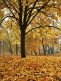 Autumn, Manito Park, Spokane, Washington, USA Photographic Print by Charles Gurche