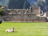 Llama Resting on Main Plaza, Machu Picchu, Peru Photographic Print by Diane Johnson