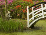Foot Bridge in Garden, Magnolia Plantation, Charleston, South Carolina, USA Photographic Print by Corey Hilz