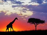 Giraffe silhouetted at sunrise, Masai Mara Game Reserve, Kenya Fotografie-Druck von Adam Jones