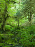 The Hall of Mosses Hoh Rainforest, Olympic National Park, Washington, USA Fotodruck von Terry Eggers