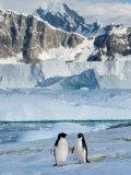Adelie Penguins, Western Antarctic Peninsula, Antarctica Photographic Print by Steve Kazlowski