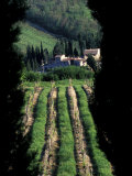 Scenic Wine Vineyard Rows, Umbra, Italy Photographic Print by Marilyn Parver