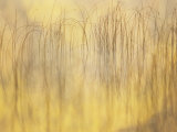 Reed Patterns and Fall Color on Little Sand Lake, Dorset, Minnesota, USA Photographic Print by Richard Hamilton Smith
