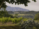 Vineyards and Cactus with Montserrat Mountain, Catalunya, Spain Photographic Print by Janis Miglavs